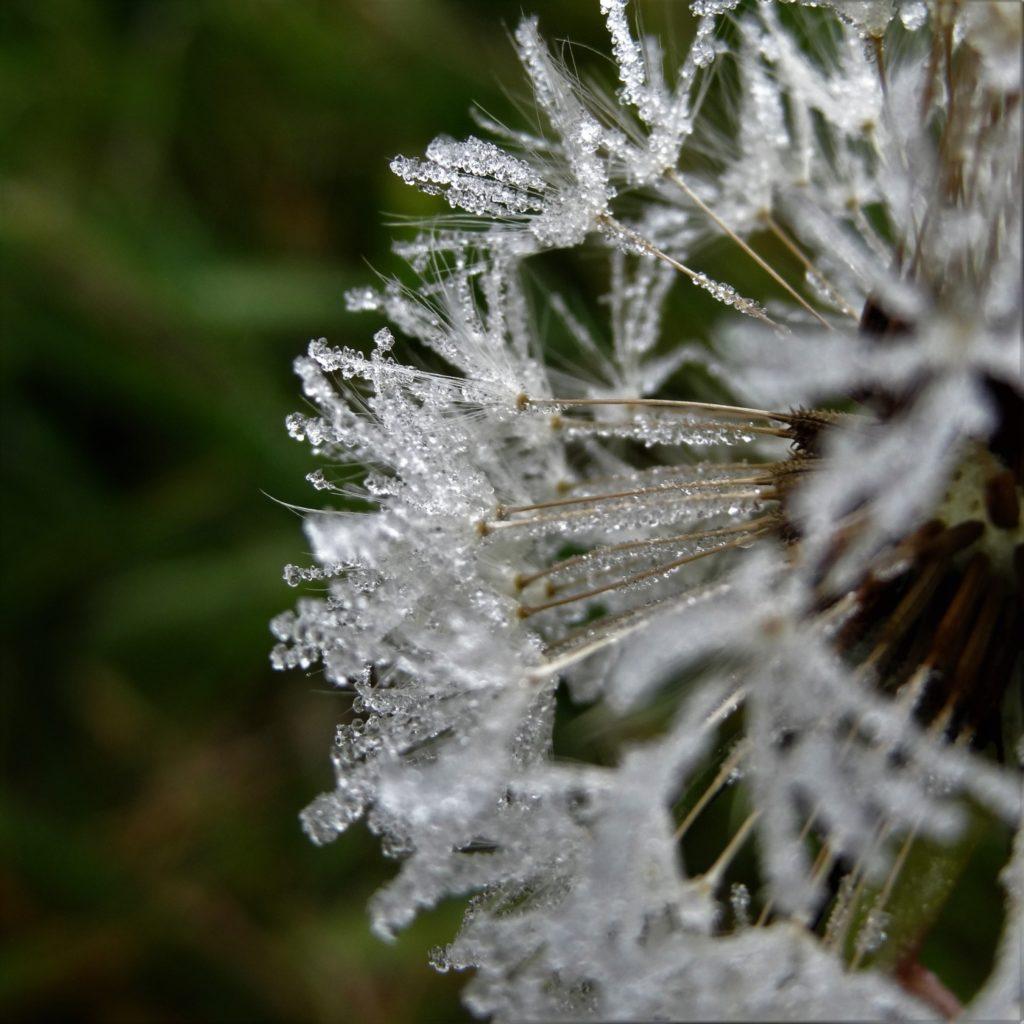 Photo printemps glacé
