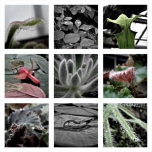 Série macro végétale